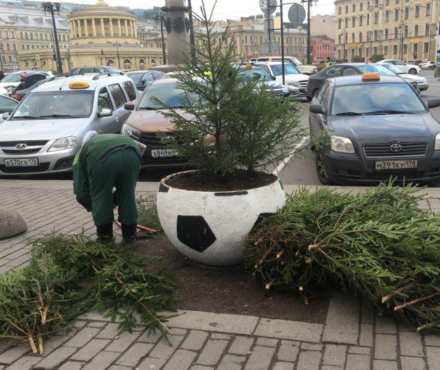 «Озеленение» клумб в Санкт-Петербурге (4 фото)