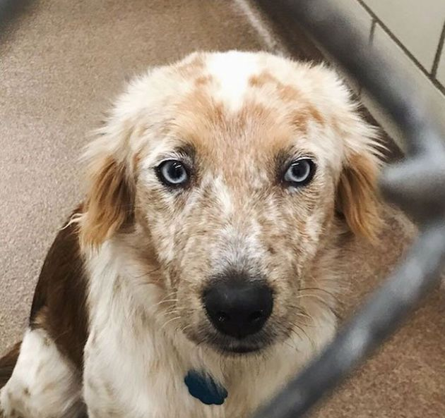 Преображение собаки, которую забрали из приюта (4 фото)