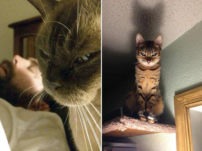 Недовольные коты (17 фото)