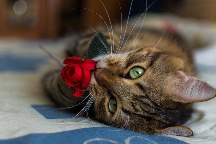 Милые и забавные животные (38 фото)