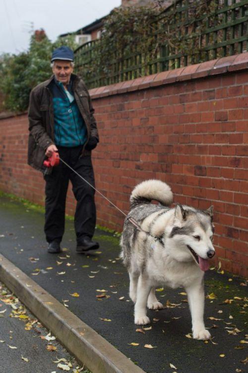 В Великобритании оправдали собаку, оказавшуюся слишком толстой для нападения (4 фото)