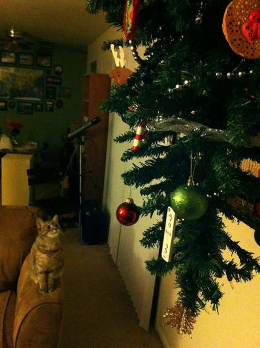 Как защитить новогоднюю елку от домашних животных (36 фото)