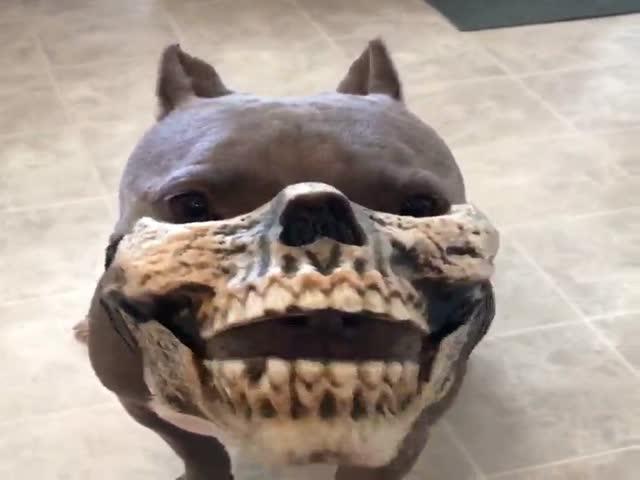 Креативная маска для питбуля