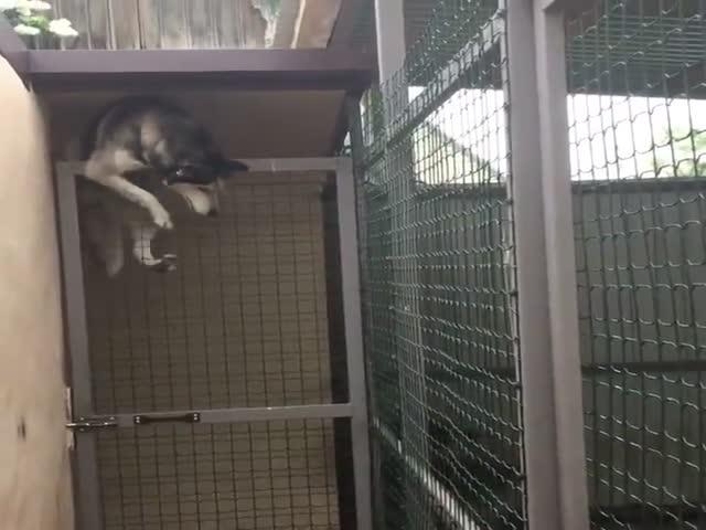 Побег из клетки