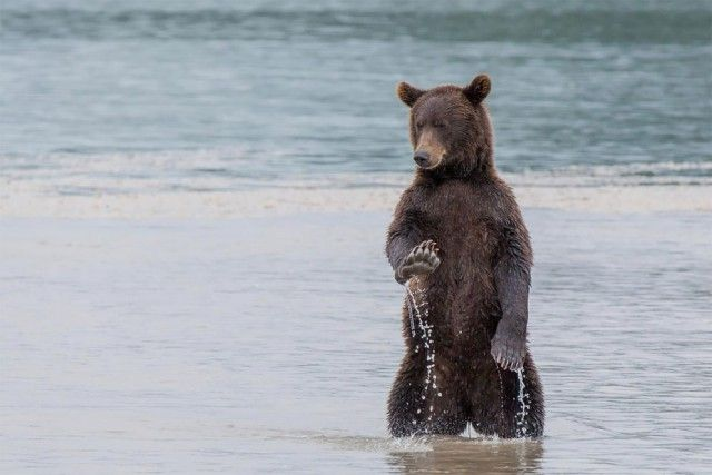 Смешные фото дикой природы на конкурсе Comedy Wildlife Awards 2017 (28 фото)
