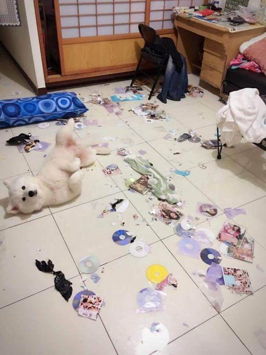 Непослушный пес уничтожил коллекцию порно своего хозяина (3 фото)