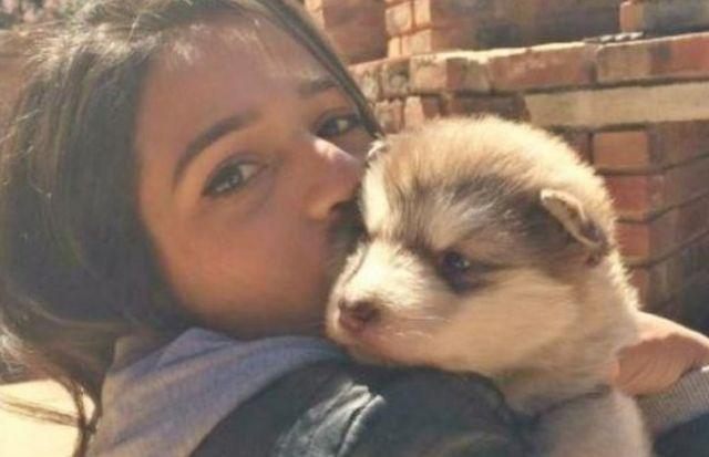 Девушка вырастила милейшего аляскинского маламута (8 фото)