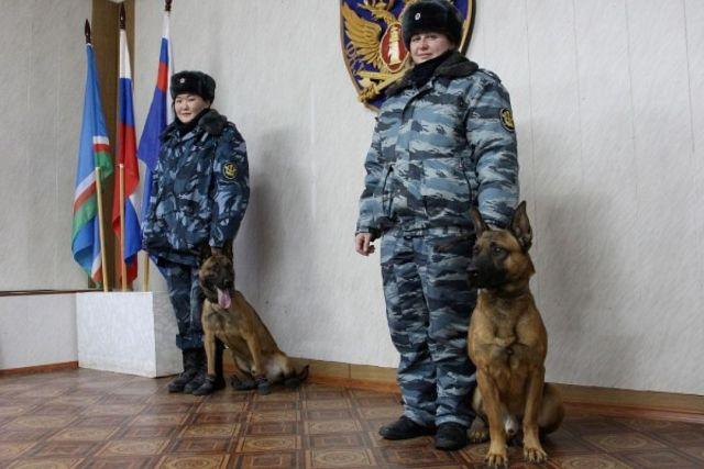 Собаки-клоны на службе УФСИН (3 фото)