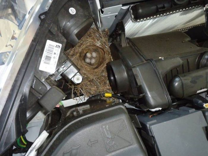 Необычные находки под капотами автомобилей (20 фото)