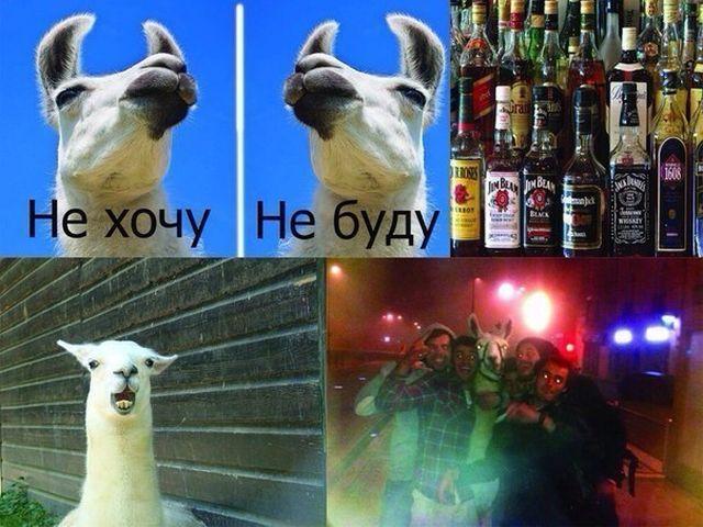 Пьяный юмор (32 фото)