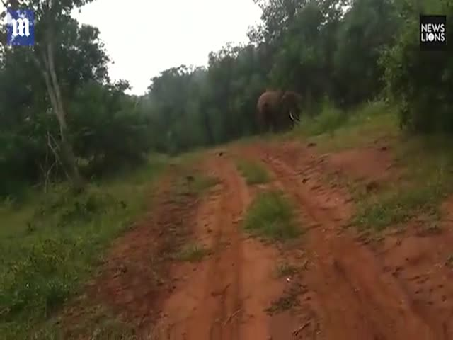 Злой слон прогнал рабочих