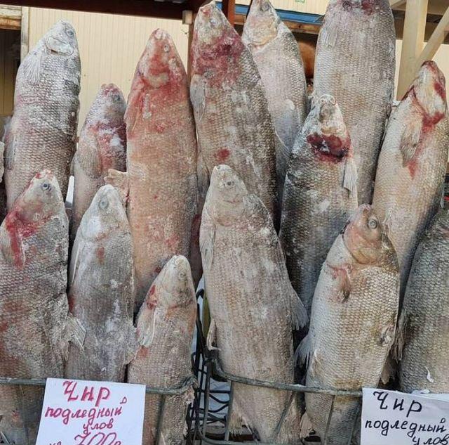 Цены на рыбу в Якутске (8 фото)