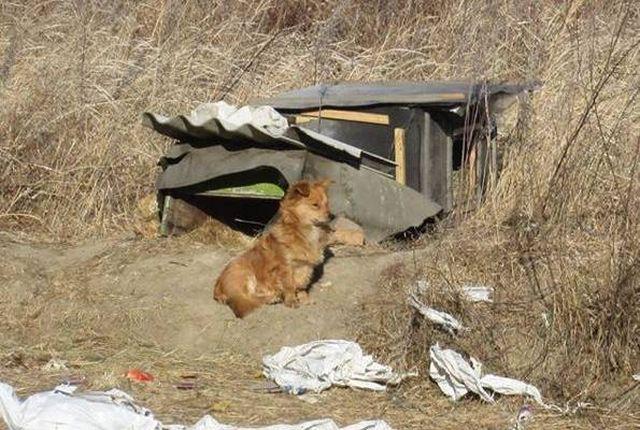 В Приморье собака третий год ждет своего хозяина на трассе (2 фото)