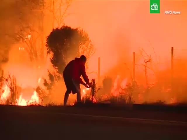 Спасение кролика на пожаре в Калифорнии