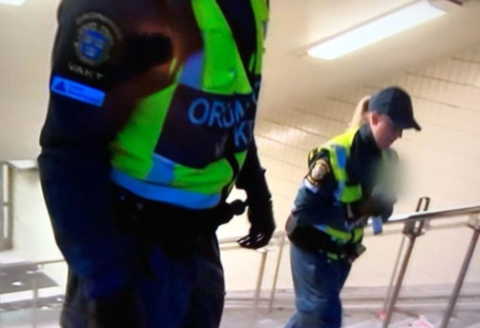 Шведское телевидение скрыло голову спасенной чайки (3 фото)