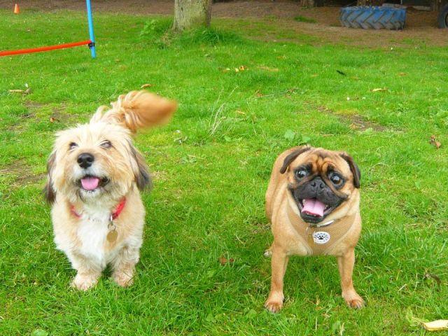 Собак спасли от жестокого хозяина (5 фото)