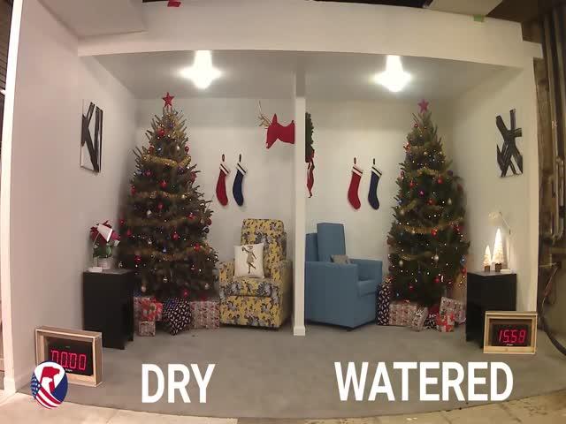 Вот почему важно поливать новогоднюю елку