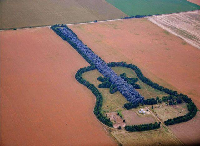Самая большая в мире лесопосадка в форме гитары (2 фото)