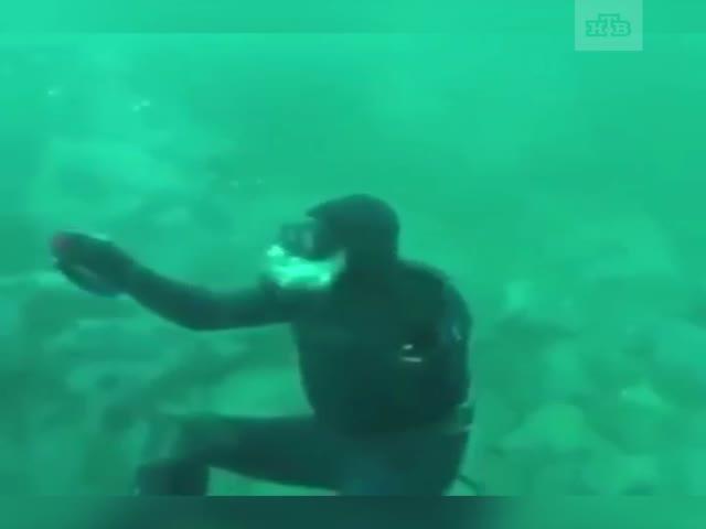 Акула едва не лишила дайвера головы
