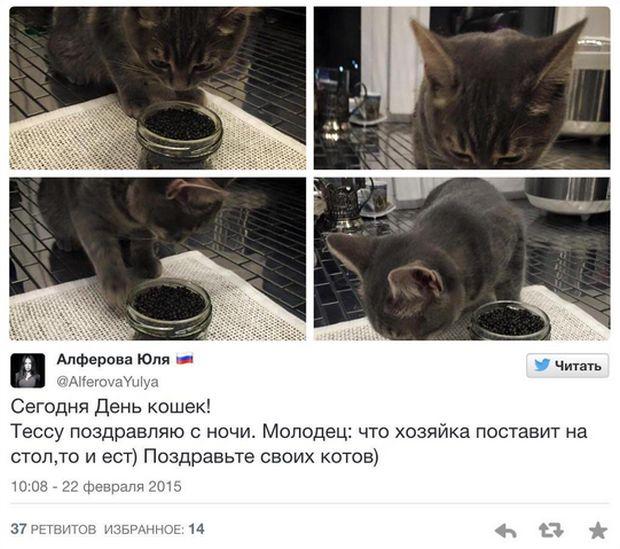 Юлия Алферова, кормящая кошку черной икрой, стала советником министра экономического развития (2 фото)