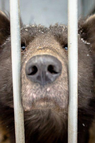 В Челябинске появилась «медвебака» (4 фото)