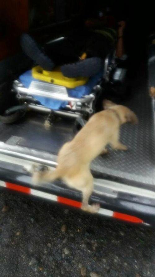 В Коста-Рике собака спасла жизнь своему хозяину (5 фото)