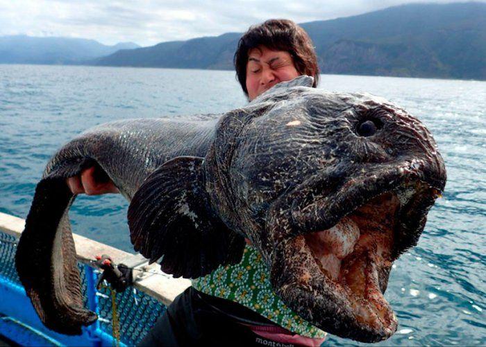 Самые жуткие существа, попавшие в сети рыбаков (20 фото)