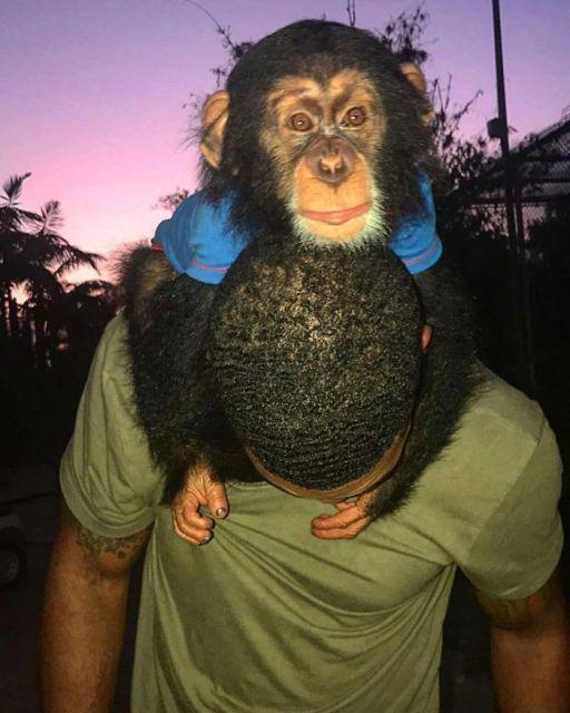 «Король джунглей» Майк Холстон, предпочитающий компанию животных компании людей (27 фото)