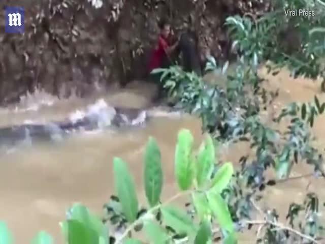 Жители Таиланда спасли 200-килограммового сома