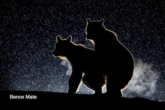 Лучшие работы конкурса смешных фотографий дикой природы Comedy Wildlife Awards (15 фото)