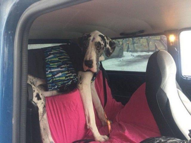 В Тюмени спасли собаку, которую привязали к дереву и оставили умирать (5 фото)