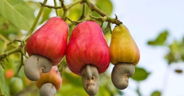 Как растут различные продукты (8 фото)