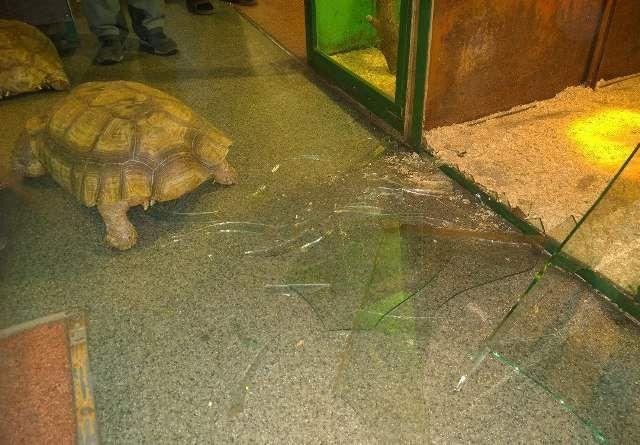 В иркутской зоогалерее черепахи совершили побег из вольера (5 фото)