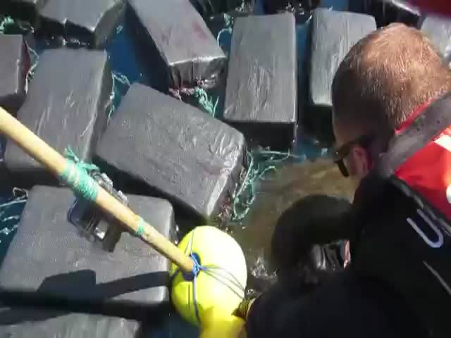 Береговая охрана США обнаружила черепаху, запутавшуюся в 800 кг кокаина