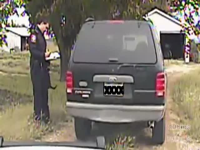 Котенок мешает полицейскому