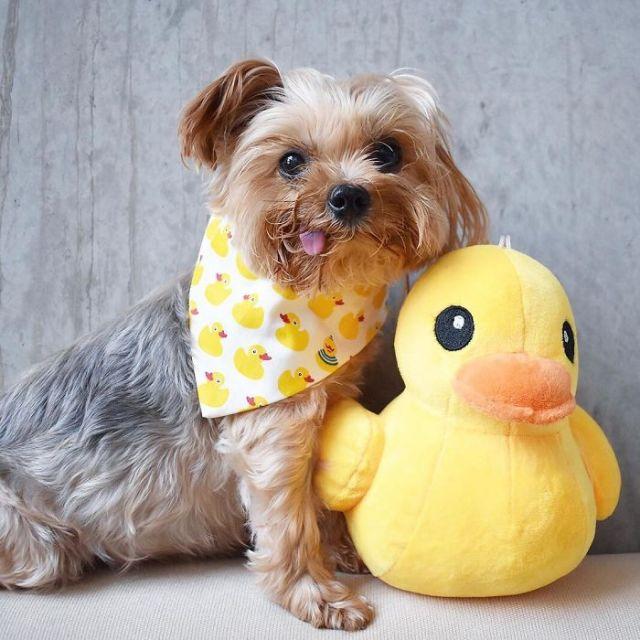 Спасенный щенок (18 фото)