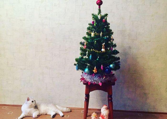 Кот, елка и вполне ожидаемый итог (3 фото)