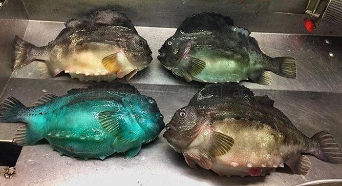 Мурманский моряк публикует фото странных обитателей моря (25 фото)