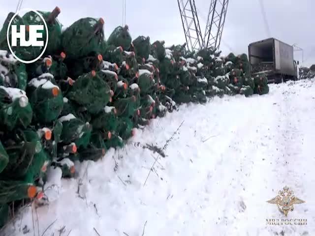 В Кемерово пенсионер вырубил 600 елей