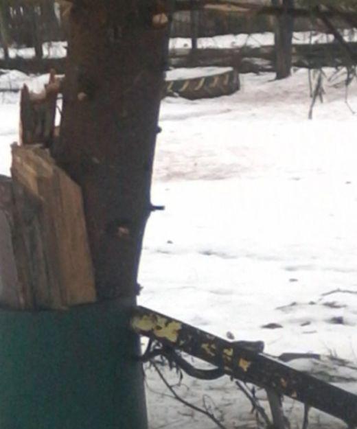 Новогодняя елка в поселке Лашма Рязанской области (2 фото)