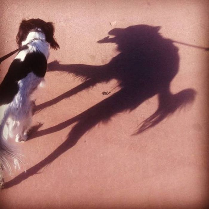 Причудливые тени (20 фото)