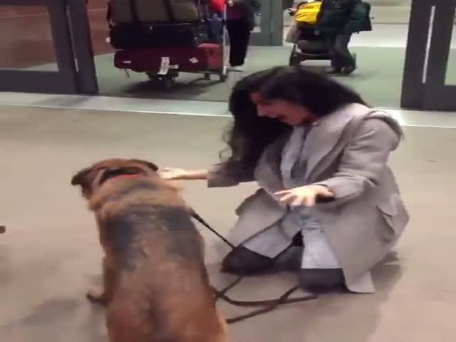 Пес встречает хозяйку в аэропорту