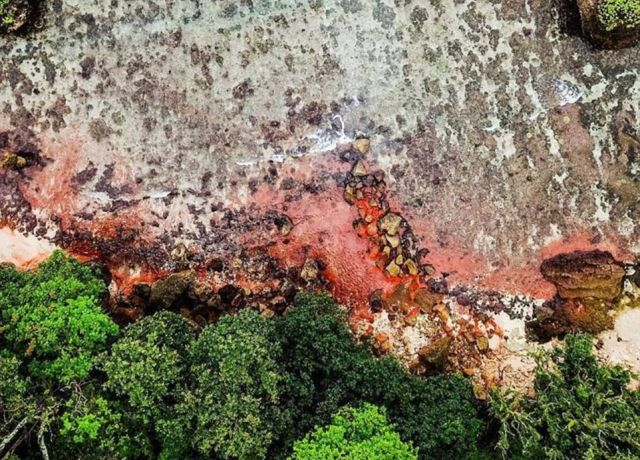 Розовые пятна покрыли остров Рождества в Индийском океане (6 фото)