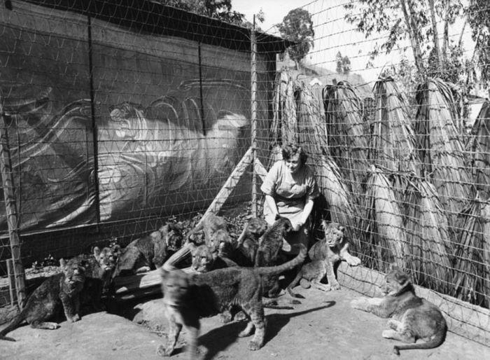 Львиная ферма в Калифорнии (20 фото)