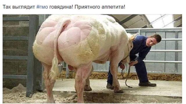 О влиянии генномодицированной говядины на организм человека (2 скриншота)