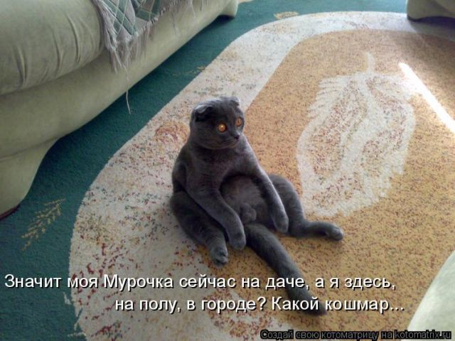 Лучшие котоматрицы недели (51 фото)
