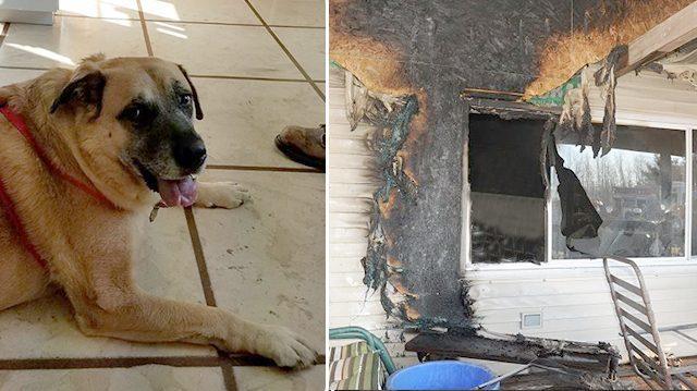 Кошка в течение двух недель выживала на пепелище (6 фото)