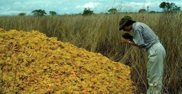 Апельсиновые корки помогли восстановить экосистему вырубленного леса (3 фото)