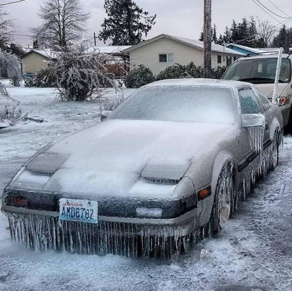 Когда зима оказалась по-настоящему суровой (27 фото)