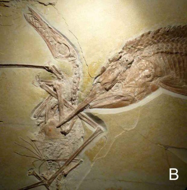 Эта находка рассказала ученым о жизни и смерти двух существ, живших 155 миллионов лет назад (5 фото)